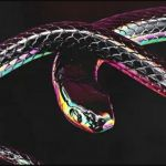 """Don Design, AKA & Moozlie Team Up For """"Python"""""""