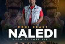Gobi Beast – Naledi